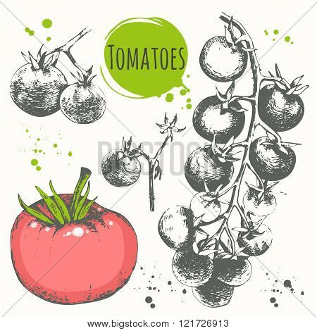 Tomatoes and cherry tomatoes. Set of hand drawn vegetables.
