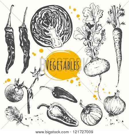 Vector illustration with sketch of mediterranean vegetable.