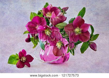 Beautiful purple flowers .
