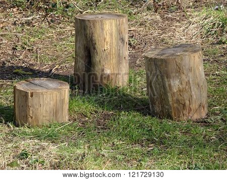 Collection Of Three Log Tree Stumps