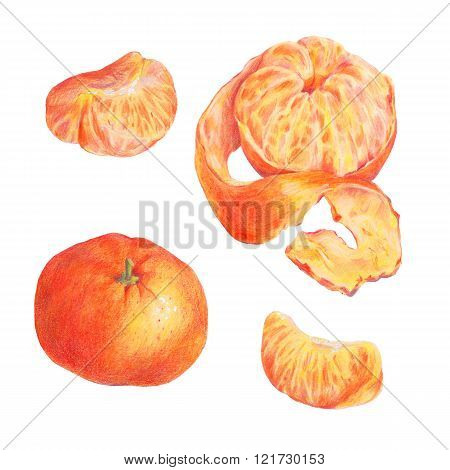Hand drawn fruit set isolated on a white