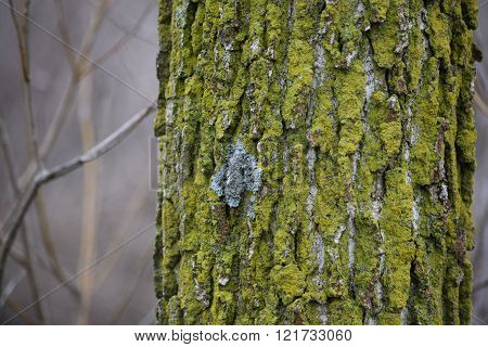 very bright different color lichens on a tree