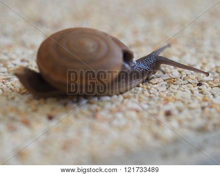Land Snail On Gravel Ground