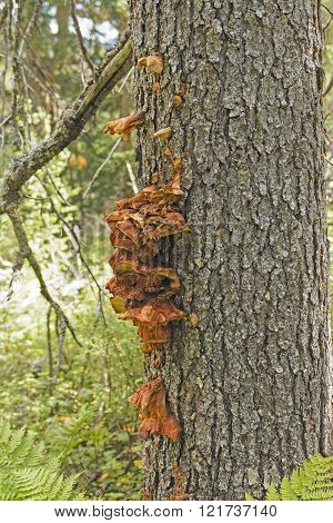Tree Fungus In The Wilderness
