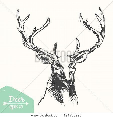 Sketch deer head vintage illustration drawn vector