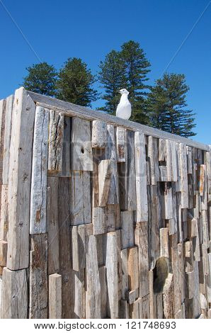COTTESLOE,WA,AUSTRALIA-MARCH 12,2016:  Sea gull on wooden sculpture at the interactive free public arts festival