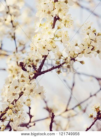 Background Of Blooming Tree
