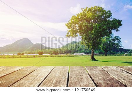 Wooden terrace with natural view and single tree, vintage tone
