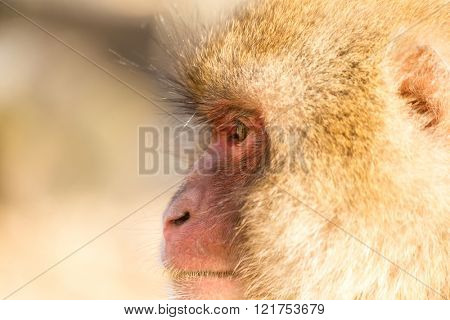 Side profile of monkey