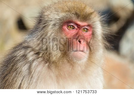 Monkey close up
