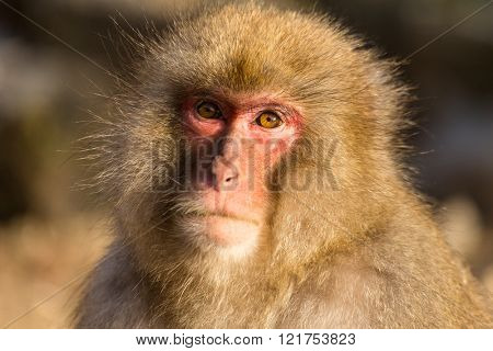 Monkey in forest