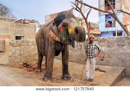 Jaipur, India - February 26: Unidentified Man Stands With Painted Elephant At A Small Elephant Quart