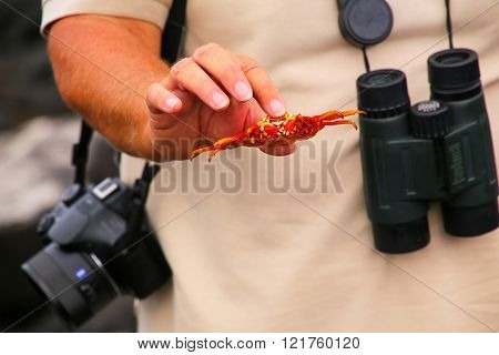 GALAPAGOS, ECUADOR - APRIL 20: Unidentified woman naturalist shows shed shell of Sally lightfoot crab on April 20, 2015 on Chinese Hat island in Galapagos National Park, Ecuador. This park is a UNESCO World Heritage Site