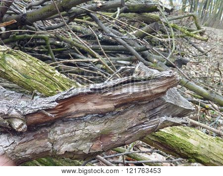 Heap Of Dry Tree Branches Cut In The Wood