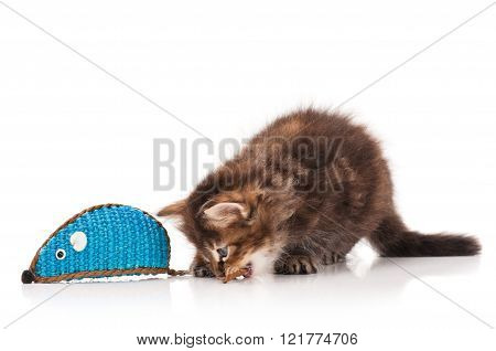 Cute siberian kitten with toy mouse isolated on white background