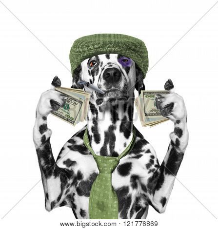 Drunk Dog Holds A Lot Of Money In The Paws