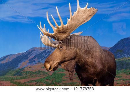 Moose Against Backdrop Of Mountains
