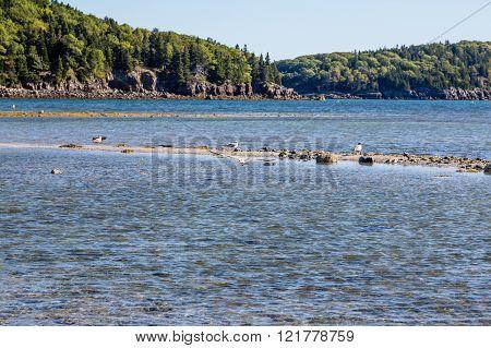 Seagulls On Sandbar In Maine