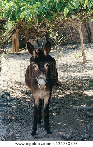 Donkey in the shadow of a tree