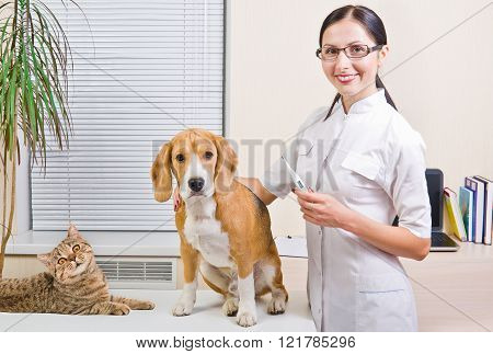 Veterinarian measures the body temperature of a dog and cat