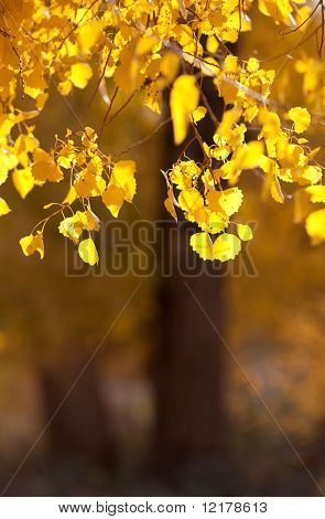 Innere Mongolei, China Ejinaqi von Populus euphratica