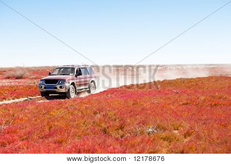 Road through the red vegetation