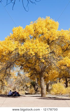 Innere Mongolei, China-Ejinaqi von Populus euphratica
