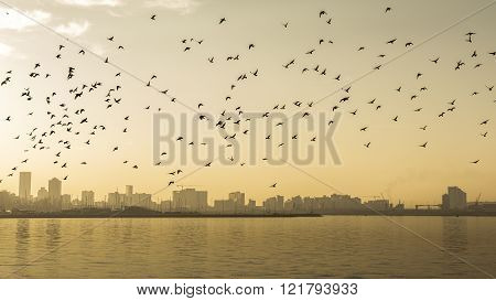 A flock of birds flying over Durban Harbor early in the morning