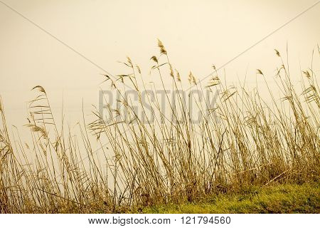 stems dry, autumn grass