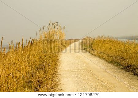 Rural road with dry grass