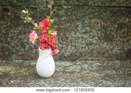 Springtime pink flowers