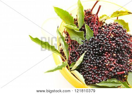 Juicy elder Berries on a white background