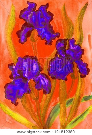 Three blue irises on red background, painting, watercolours