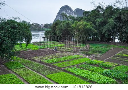 China. Woman Working In The Garden On The River Bank