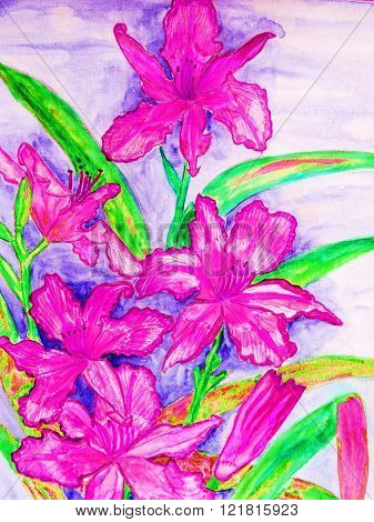 painting in watercolour pink daily lilies vertical.