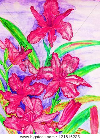 painting in watercolour pink daily lilies, vertical.