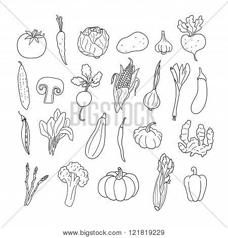 Set of hand drawn vegetables. Doodles, vector illustration. Isolated on a white background.