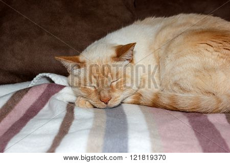Cat Sleeping On Soft Striped Plaid