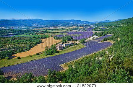 Tipical Provencal landscape