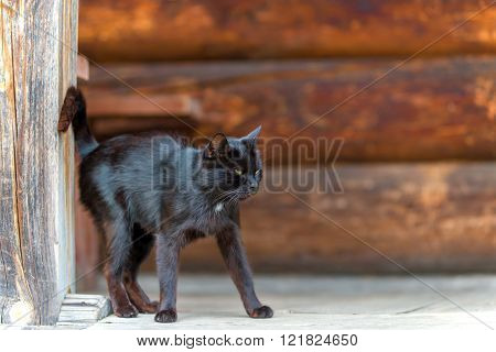 Black cat on the doorstep of rural house close-up
