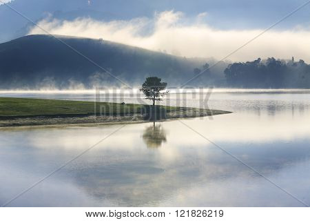 Alone tree in lake in sunny day