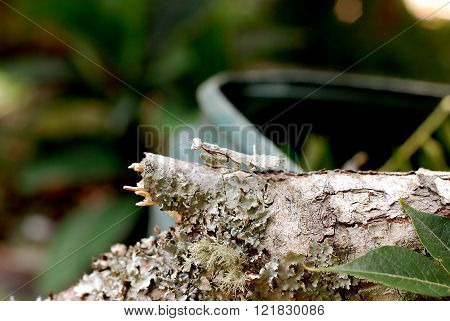Camouflage Insect