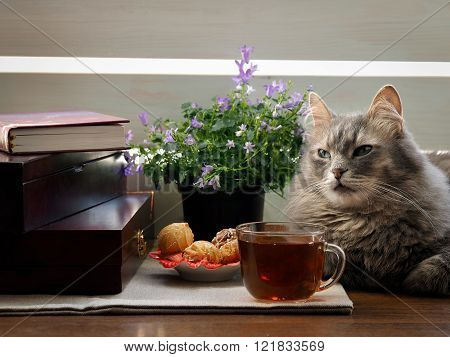 Home comfort - a cat, a cup of tea, a book, the sun's rays and a plate of sweets