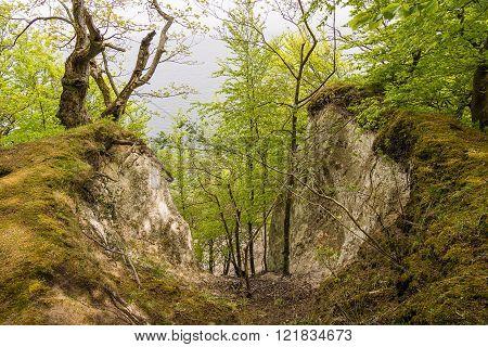 Coastal Forest On The Island Ruegen