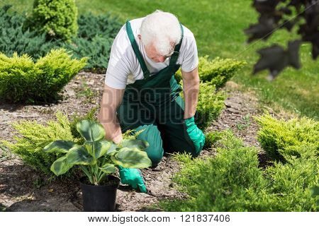 Caring About Garden