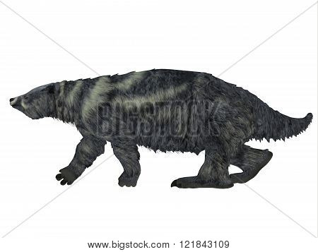 Eremotherium was one of the largest ground sloths that lived in North and South America in the Pleistocene Period.