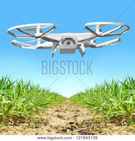 Drone flying over vegetable garden. New tool for farmers use drones to inspect of cultivated fields. Modern technology in farming. Digital artwork of fictional vehicle on agriculture theme.