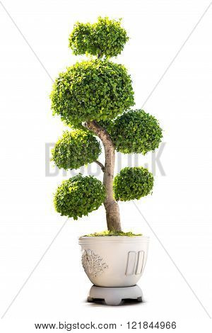 Bonsai houseplant for decoration in the concrete pot isolated on white