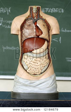 medical Mannequin in classroom