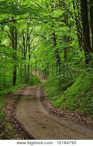 lush green forest